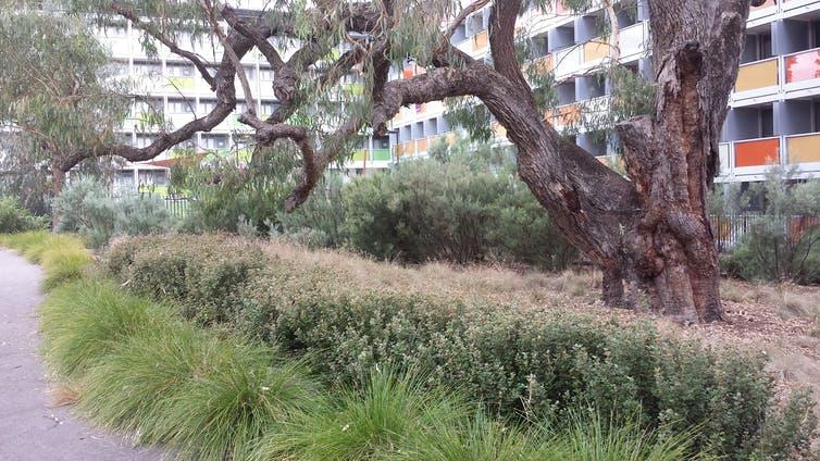 Što bi se dogodilo da posiječemo sva gradska stabla?