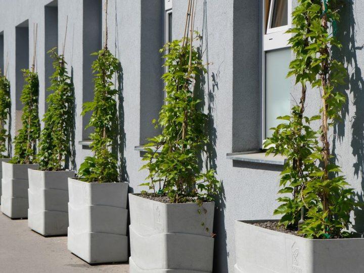 Grad Beč subvencionira ozelenjivanje fasada