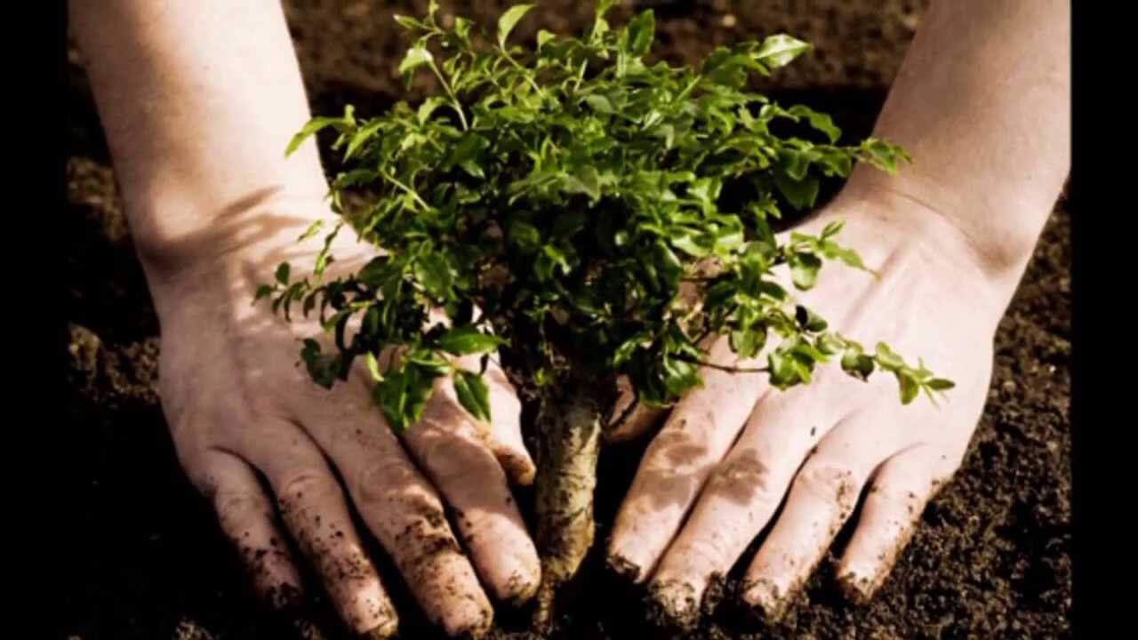 Sadnja jednog stabla u gradu zamjenjuje pet klima uređaja