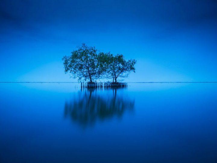 FASCINANTNA PAMETNA PRIRODA: Drveće ima osjećaje i sklapa prijateljstva