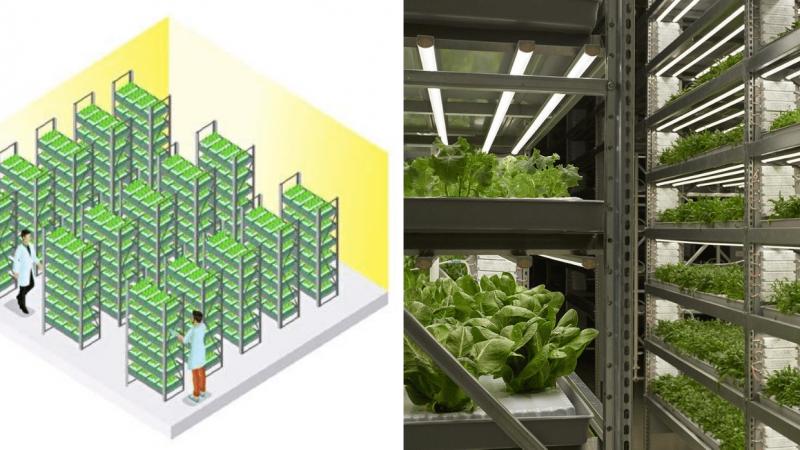 Što je to vertikalna poljoprivreda?