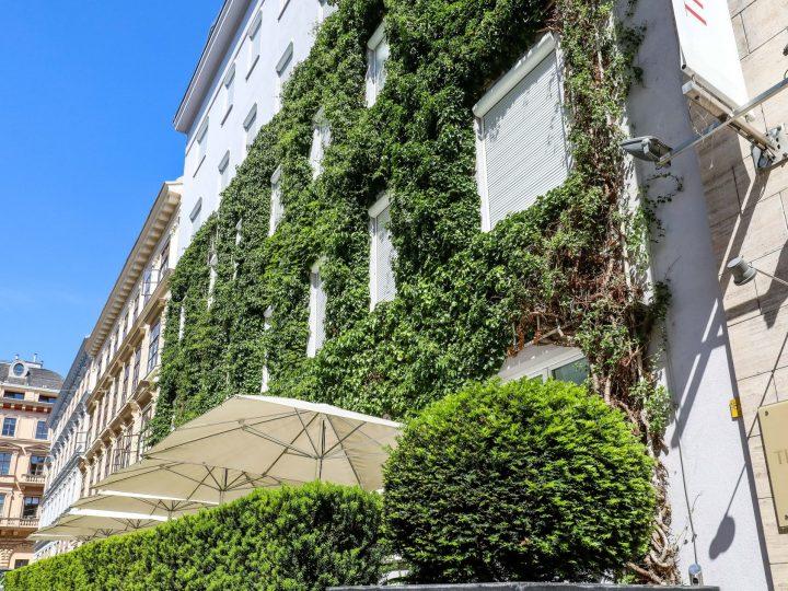 Grad Beč subvencionira ozelenjivanje fasada, krovova i unutarnjih dvorišta