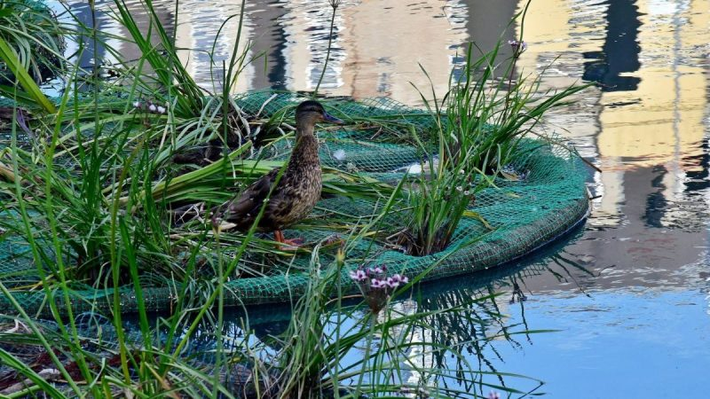 Plutajući vrtovi štite divlje životinje u gradu Poznanju